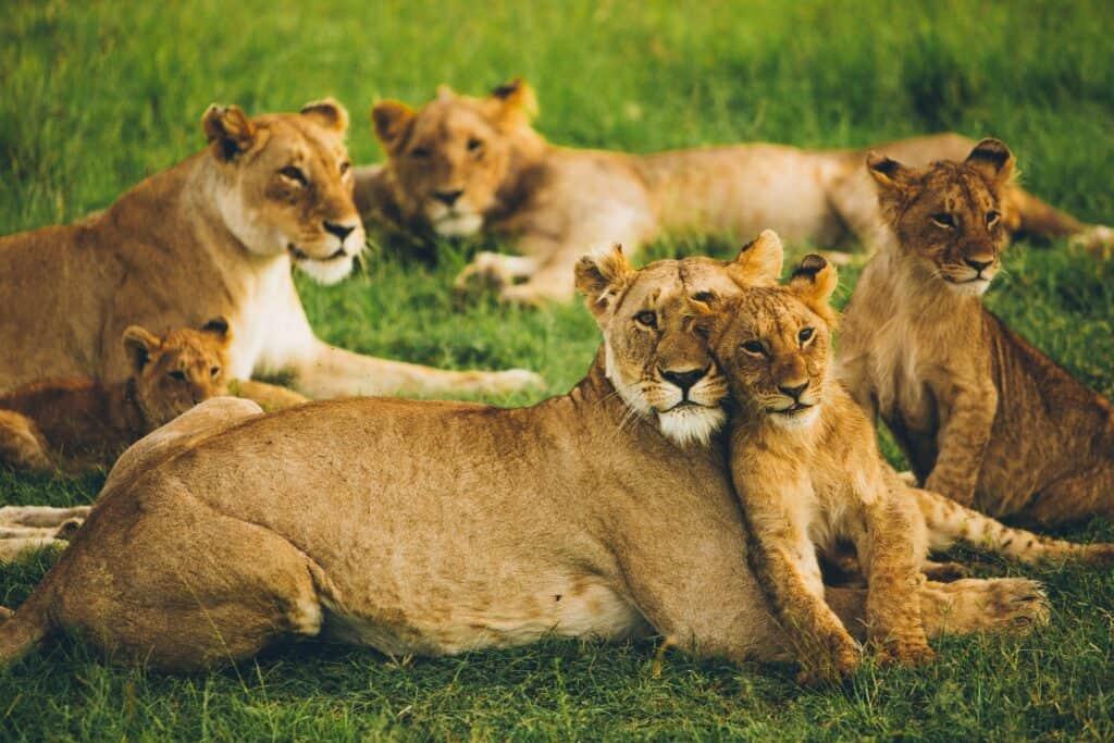 linkedin lion email list
