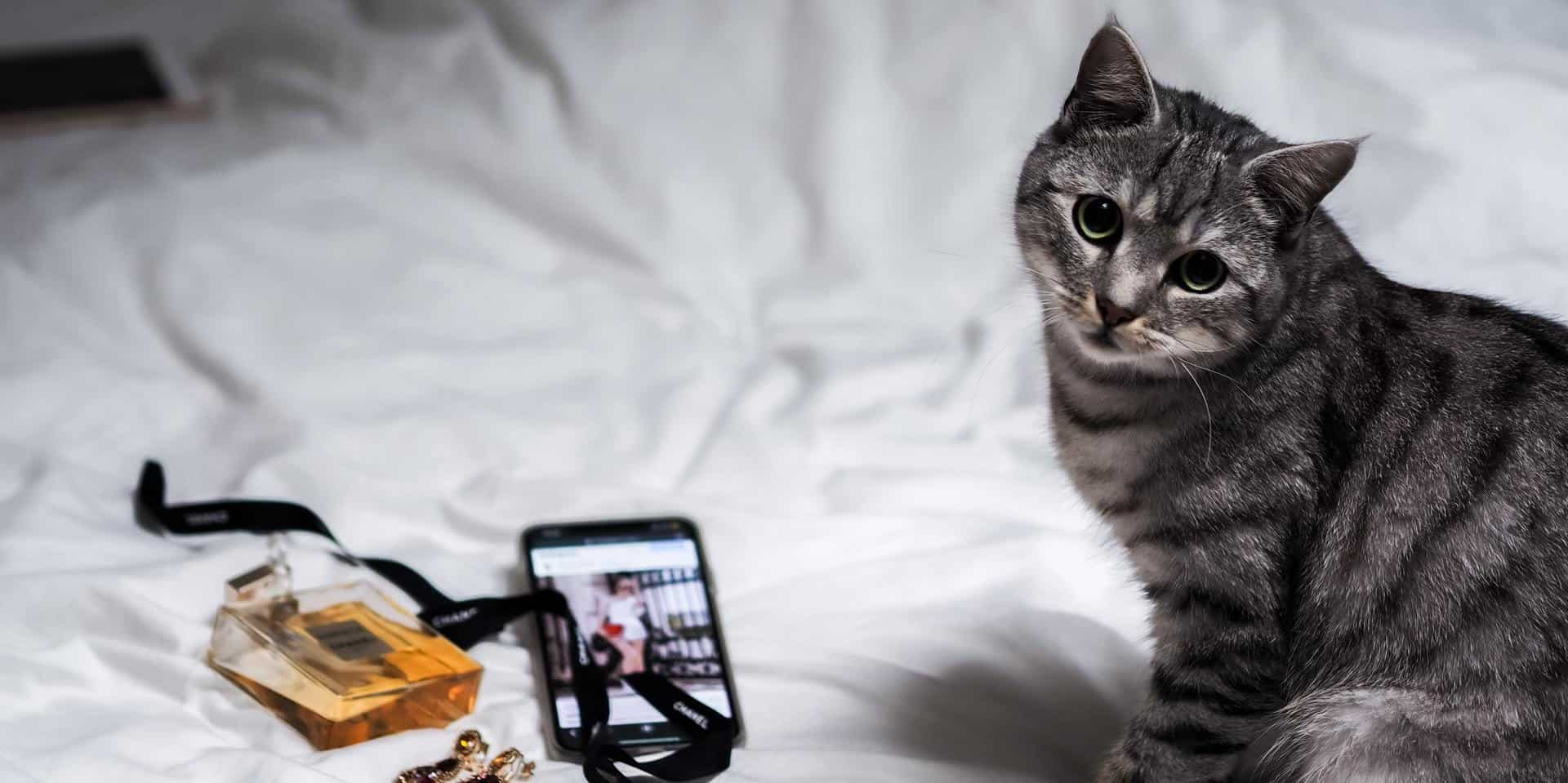 Your Guide to Leveraging Instagram Ecommerce for Business
